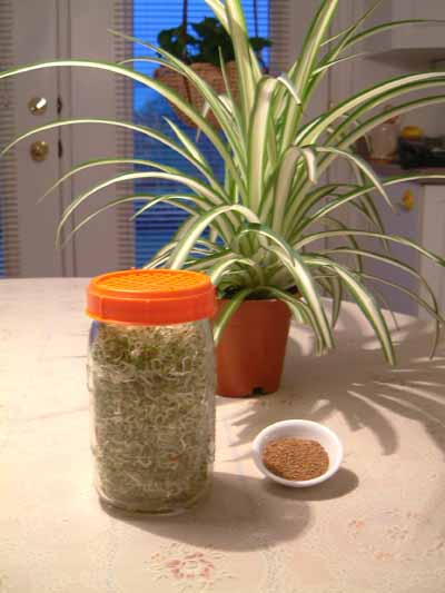 Sprouting Jar and   seeds